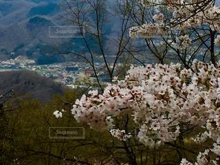 近くの花のアップの写真・画像素材[1148128]