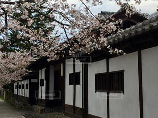 桜並木🌸と白壁の家の写真・画像素材[1148220]