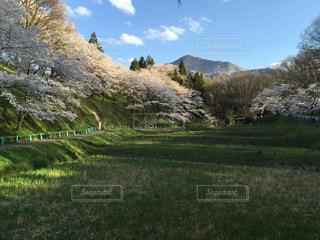 近くに緑豊かな緑の丘陵のアップの写真・画像素材[1148243]