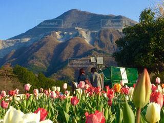 山の前に赤い花の写真・画像素材[1148257]