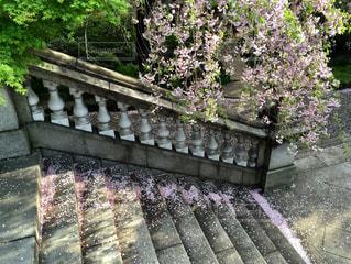 庭の木製ベンチの写真・画像素材[1148422]