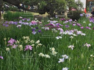 フィールドにピンクの花の写真・画像素材[1151625]