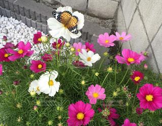 テーブルの上の花の花瓶の写真・画像素材[1151628]