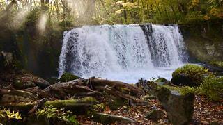 林の木漏れ日の滝の写真・画像素材[1491259]