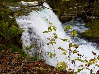 奥入瀬の滝の写真・画像素材[1491317]