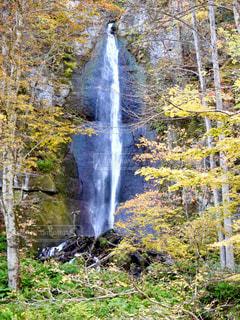 奥入瀬の川に注ぐ滝の写真・画像素材[1491332]