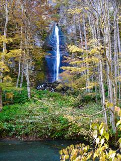 林の中の滝の写真・画像素材[1491338]