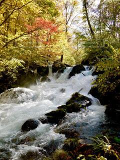 奥入瀬渓流の瀑布の写真・画像素材[1491352]