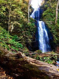 木々 に囲まれた滝の写真・画像素材[1491369]