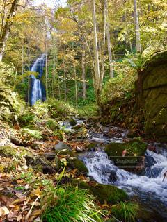 林の中の滝の写真・画像素材[1491373]