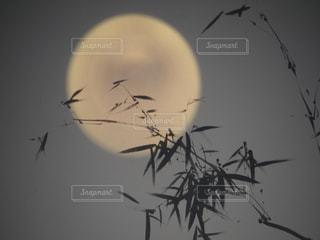 満月と笹竹の写真・画像素材[1517491]