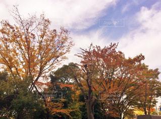 秋,紅葉,雲,青空,もみじ,木場公園,秋空,カエデ,秋色