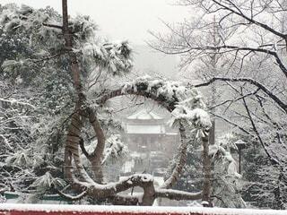 雪景色、月の松から弁天堂の写真・画像素材[1678997]