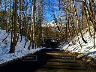 冬の軽井沢の写真・画像素材[1762494]