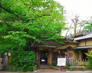 上野公園の和風家屋の写真・画像素材[3203732]