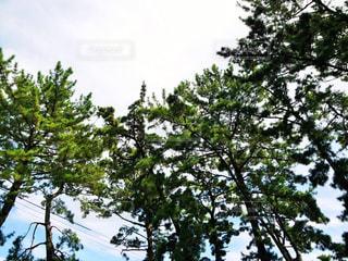 境内から見上げる空の写真・画像素材[3205083]