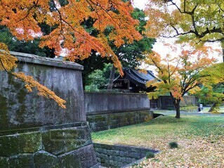 塀と紅葉の写真・画像素材[3770997]