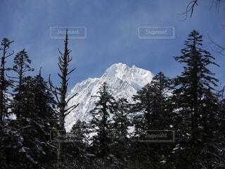 森から望む雪山の写真・画像素材[4141127]