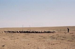 草原の羊たちの写真・画像素材[4637631]