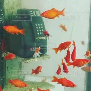 カフェ,魚,水族館,奈良,金魚,水槽,電話ボックス,テキスト,子供の芸術