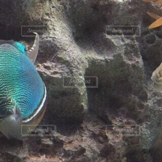 動物,魚,水族館,葉,水中,エメラルドグリーン,蛍光色,イカ,泳ぎ,モンゴウイカ,コウイカ