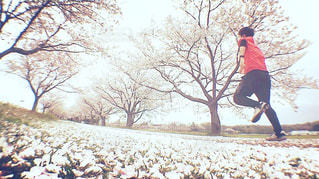 No.433094 桜