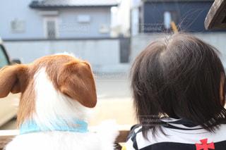 犬,仲良し,写真,赤ちゃん,男の子,1歳,ジャックラッセルテリア,1歳児,ツーショット,見た目は違えど家族