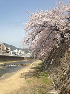 春 - No.402314