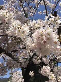 春 - No.402337