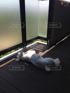 犬 - No.472574