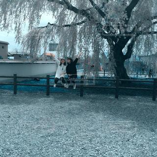 北海道,しだれ桜,姉妹,ツーショット