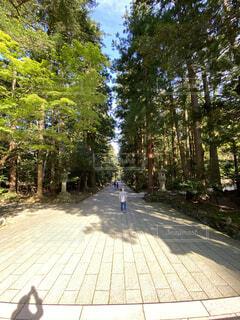 弥彦神社の参道の写真・画像素材[3750964]