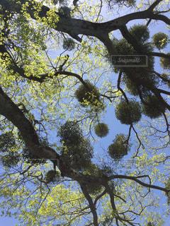 近くの木のアップの写真・画像素材[1068267]