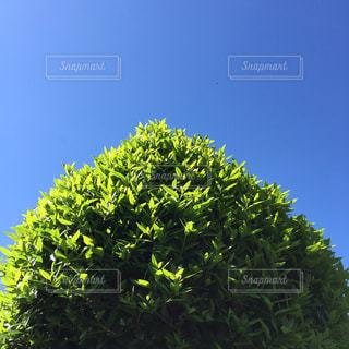 近くの木のアップの写真・画像素材[1099360]