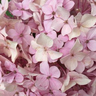 近くの花のアップの写真・画像素材[1445736]