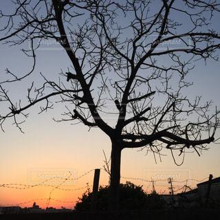 背景の夕日とツリーの写真・画像素材[1867206]
