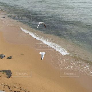 水域の近くの浜辺に立つカモメの群れの写真・画像素材[2374072]