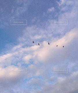 曇り空を飛ぶ鳥の群れの写真・画像素材[2426038]
