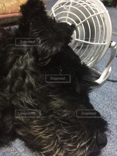 地面に横たわっている茶色と黒犬 - No.743202
