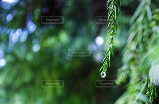 緑の写真・画像素材[459295]