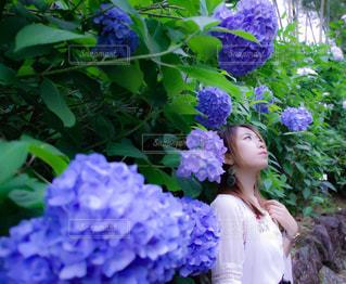 夏の写真・画像素材[572317]