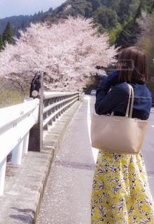 お花見の写真・画像素材[1112170]