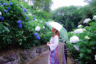 雨,傘,あじさい,紫陽花,熊本,日本,rain,ポートレート,梅雨,japan,人吉,photo,umbrella,インスタ映え