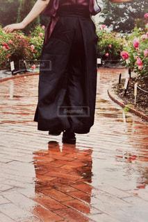 雨,バラ,薔薇,写真,rain,和服,雫,梅雨,rose,photo,Japanese