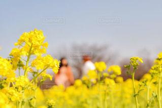 花,晴れ,散歩,黄色,イエロー,休日,レジャー,デート,お散歩,お出かけ,晴れの日
