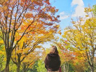 女性,20代,秋,紅葉,晴れ,散歩,銀杏,休日,レジャー,のんびり,Autumn,girl,お散歩,ほのぼの,お出かけ,晴れの日