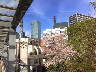 桜,ビル,青空,お花見,病院,不動産,さいたま新都心,横長