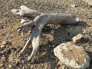 海,砂,海岸,流木,浜,いし,ツーショット