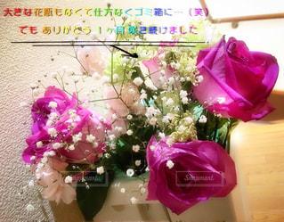 ピンク,プレゼント,ゴミ箱,カーネーション,グリーン,はな,あか,ありがとう,しろ,は,ばら,霞草