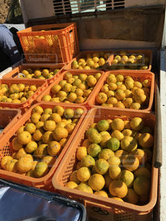黄色,ゆず,柚子,ビタミンC,柑橘類,ゆず茶,ゆず収穫